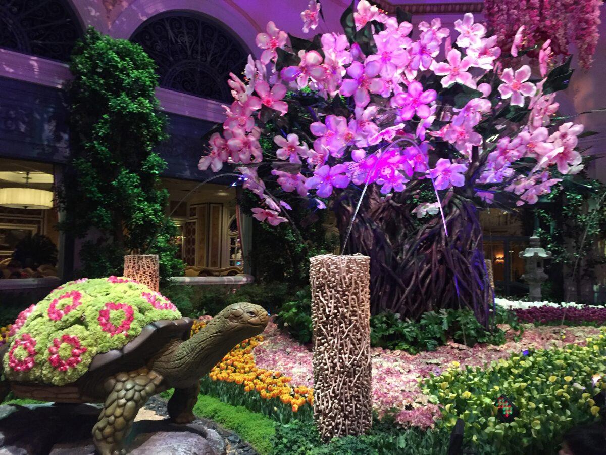 The Aesthetic Meeting — ASAPS 2016 Las Vegas — Vitaly Zholtikov